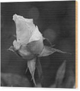 Monochrome Rose Wood Print