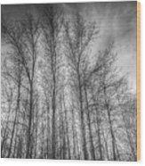 Monochrome Sunset Trees Wood Print