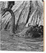 Monochrome Swimming Black Swan Wood Print