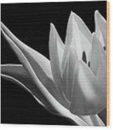 Monochrome Tulip Wood Print