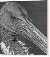 Monochrome Eye-bis Wood Print