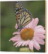 Monorch Butterfly Wood Print