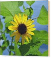 Monsoon Sunflower Wood Print
