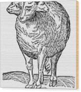 Monster, 16th Century Wood Print