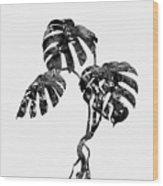Monstera Leaf-black Wood Print