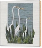 Montage With 3 Great White Egrets Wood Print