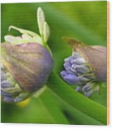 Montana Blue Wood Print