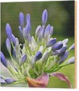 Montana Flower  Wood Print