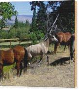 Montana Horses Wood Print