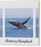 Monterey Humpback Wood Print