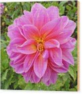 Monterey Pink Wood Print