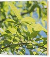 Monterrey Oak Leaves In Spring Wood Print