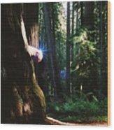 Montgomery Woods Burl Wood Print