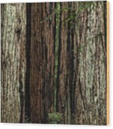 Montgomery Woods State Natural Reserve Wood Print