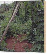 Monticello Vegetable Garden  Tee Pee Wood Print