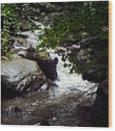 Montreat Creek North Carolina Wood Print