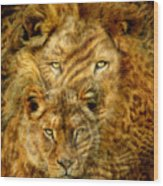 Moods Of Africa - Lions 2 Wood Print