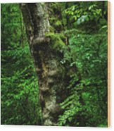 Moody Tree In Forest Wood Print