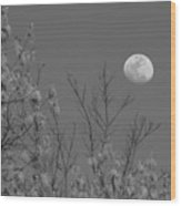 Moon And Trees B And W Wood Print