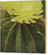 Moon Cactus Blooms Wood Print