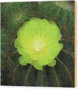 Moon Cactus Wood Print