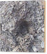 Moon Crater Wood Print