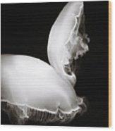 Moon Jellyfish Touching Wood Print