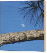 Moon On A Pine Bough Wood Print