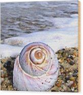 Moon Snail Wood Print