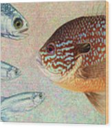 Mooneyes, Sunfish Wood Print by James W Johnson