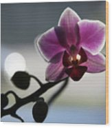 Moonlight And Orchid Wood Print
