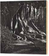 Moonlight In The Park - Valencia Wood Print