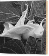 Moonlight/moonflower Wood Print