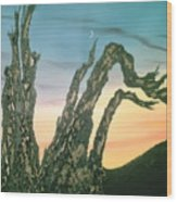 Moonset-bristlecone Pine Wood Print