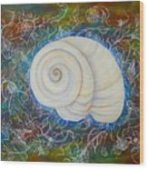 Moonsnail Lace Wood Print