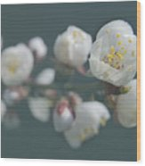 Moorpark Apricot B 4212 Wood Print