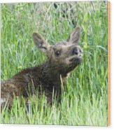 Moose Baby Wood Print