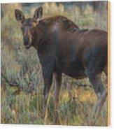 Moose Calf In Fall Colors Wood Print