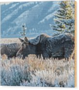 Moose In Cold Winter Ice Wood Print