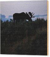 Moose In Silhouette Wood Print