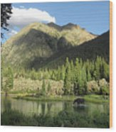 Moose In The Elk Creek Beaver Ponds Wood Print