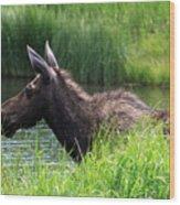 Moose In The Pond - 1 Wood Print