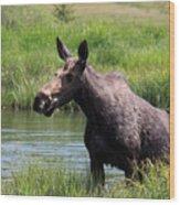 Moose In The Pond - 2 Wood Print