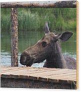 Moose In The Pond Wood Print
