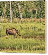 Moose Meadows Wood Print
