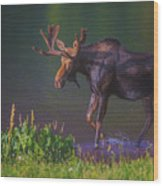 Moose On The Loose Wood Print