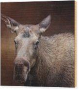 Moose Portrait Wood Print