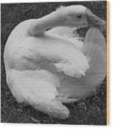 Moose The Goose Wood Print