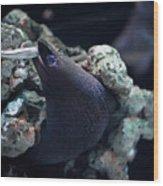 Moray Eel Eating Little Fish Wood Print