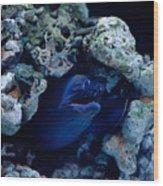 Moray Eel Or Muraenidae Fish Wood Print